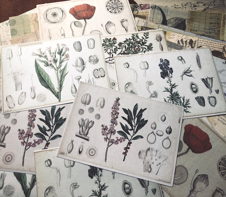 Floral Themed Sticker Paper