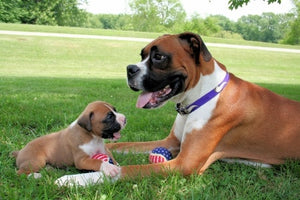 Boxers  Dog Books for Kids