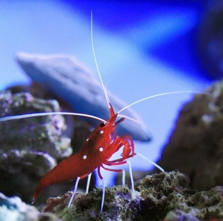 shrimp amazing animal books