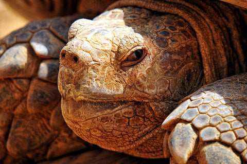 amazing animal books turtles