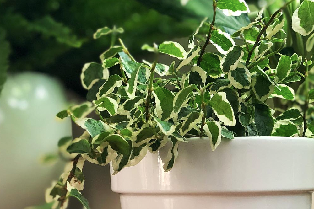 Remove Toxins & Purify The Air In Your Space With These Plants