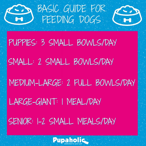 dog feeding guide