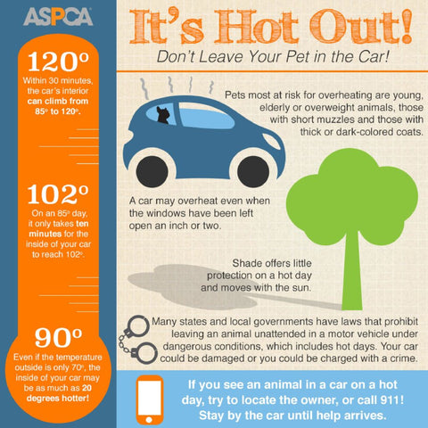 Hot Car Flyer for Pet Owners