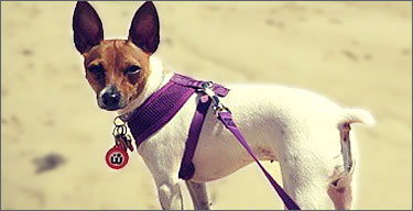 Pet Harnesses Icon