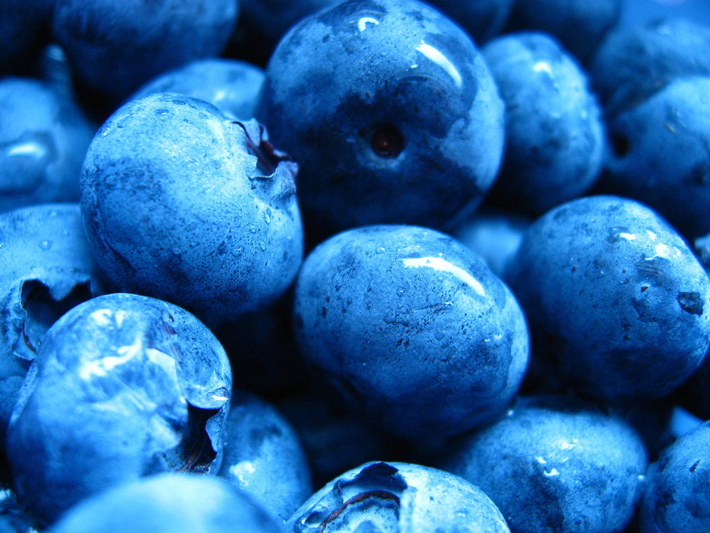 What Is Blue and Good For Fido? Blueberries Dog Treat