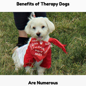 Therapy Dogs In Hospitals and Hospices