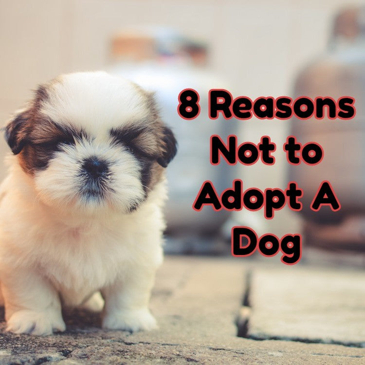 Why you shouldn't adopt a dog