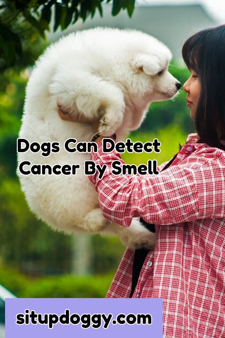 dog and cancer