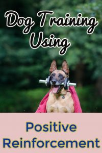 dog training positive reinforcement