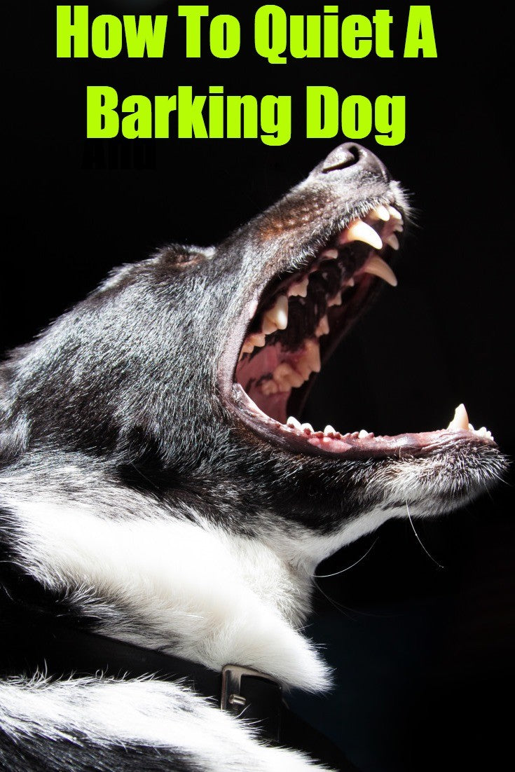 how to quiet a barking dog