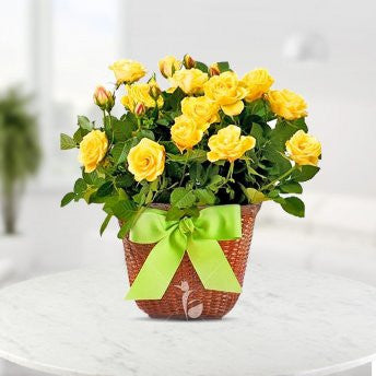 20 yellow roses in a basket - saysurprise