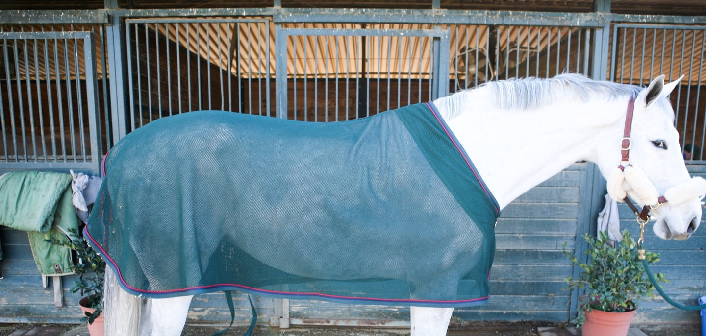 Grey horse in green scrim horse blanket and cooler