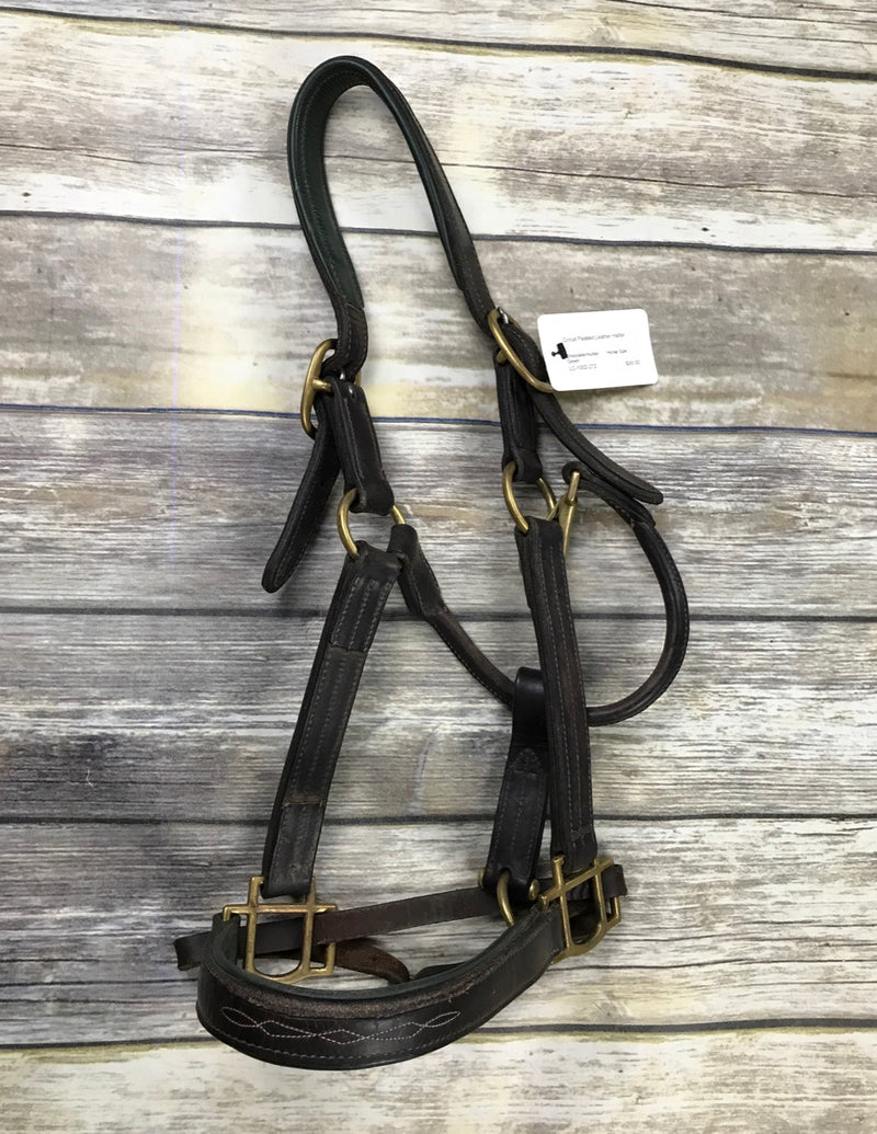 Circuit Padded Leather Halter in Chocolate/Hunter Green - Horse Size