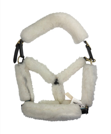View of Merino Fleece on demonstration halter