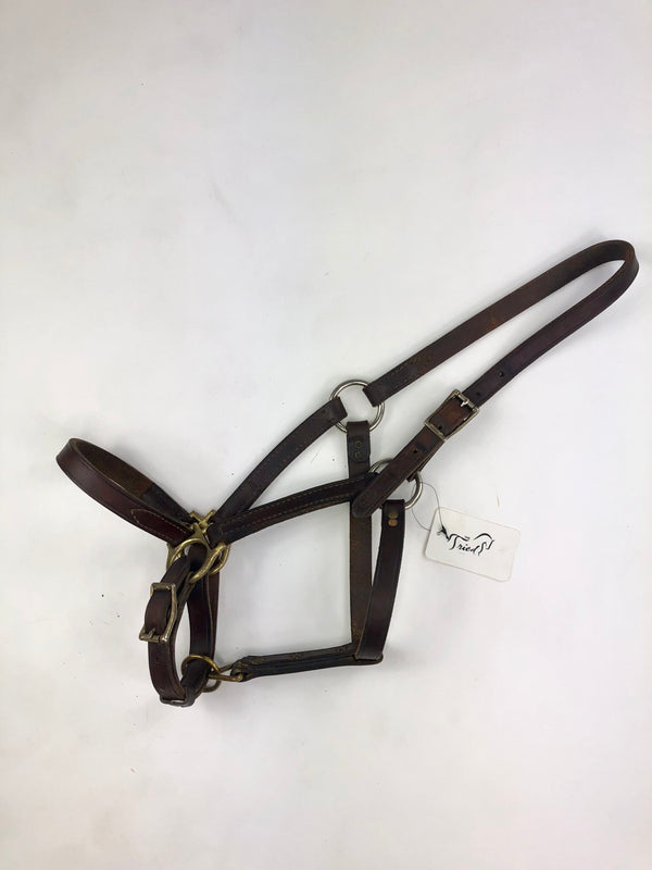 Champion Turf Leather Halter in Brown - Approx. Cob Size