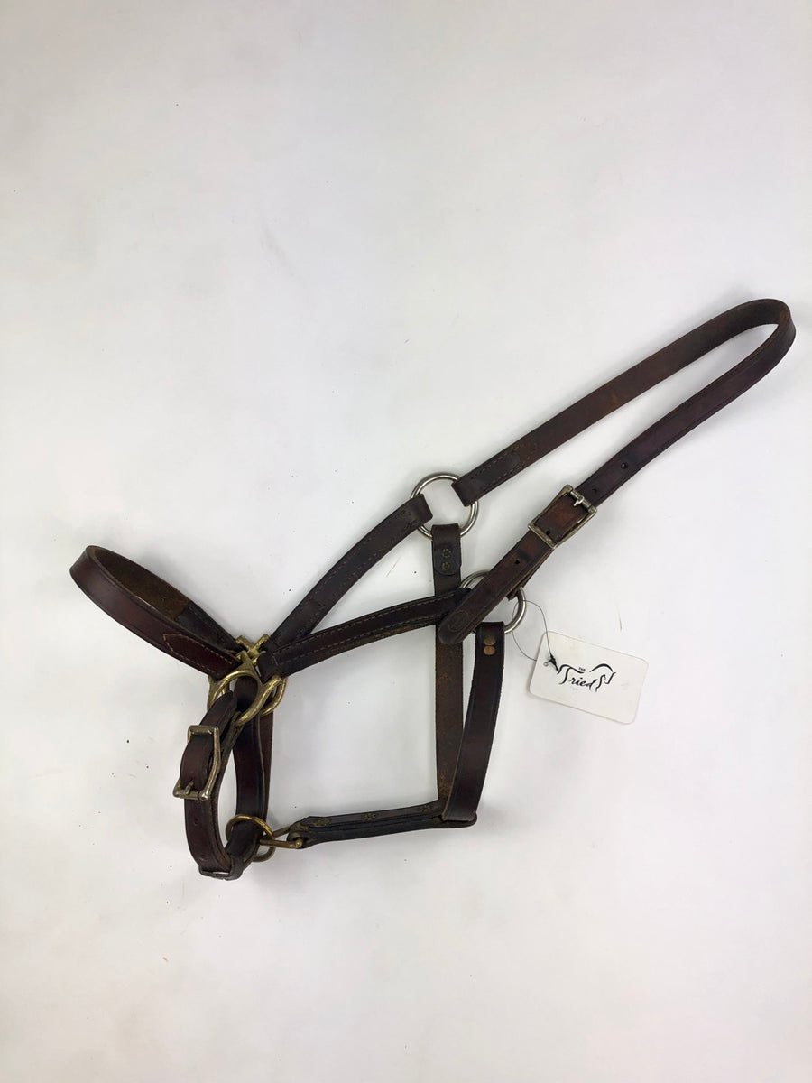 Champion Turf Leather Halter in Brown - Overview