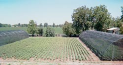 aerial view of front field filled with milkweed (A. curassavica)