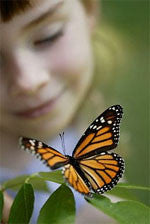 monarch butterfly with girl on box