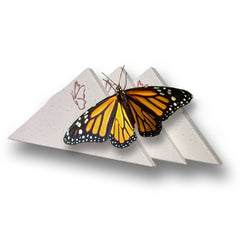 Individual Butterfly Release Box - For Monarchs