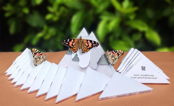 Package Deal - Painted Ladies in 150 Standard Boxes and 2 Special Boxes