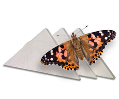 Individual Butterfly Release Box - For Painted Ladies
