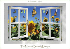 Double-Sided Monarch Life Cycle Poster