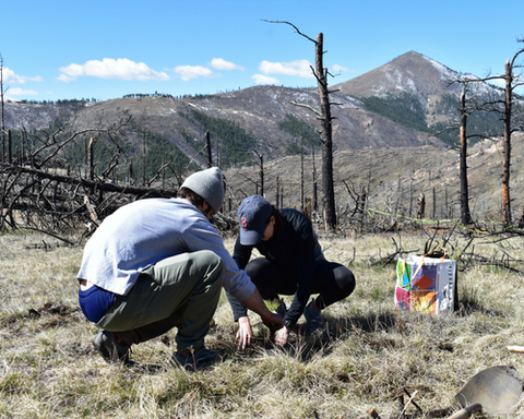 Colorado Tree Planting