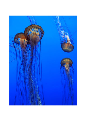 'Jelly 3' Limited Edition Giclée Print by Stephen Pick