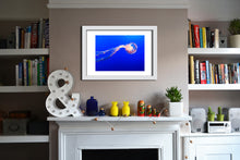 'Jelly 1' Limited Edition Giclée Print by Stephen Pick