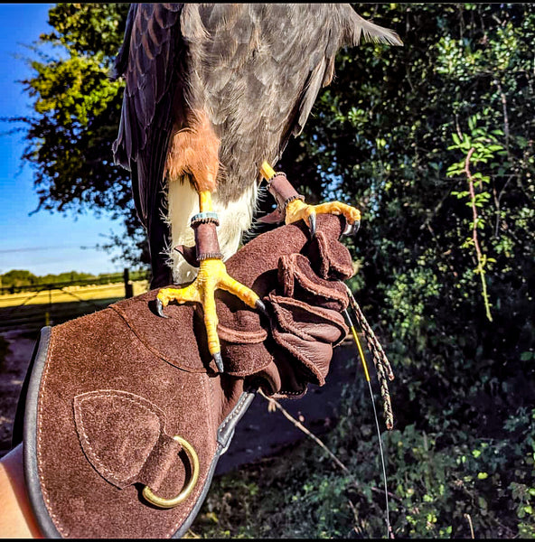 Bespoke Falconry Gloves