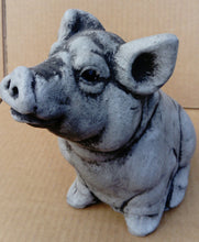 Little Pig, Grey