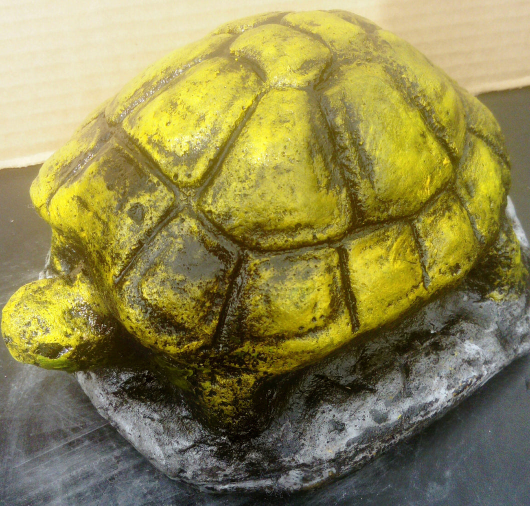 Tortoise, Bright coloured