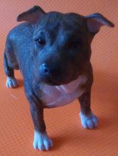 Staffordshire Bull Terrier (Brown)