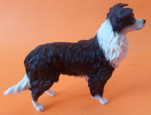 Border Collie (Standing)