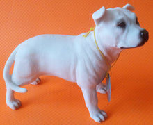 Staffordshire Bull Terrier White