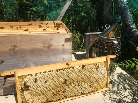 Bees Wax Honey Collecting Hive