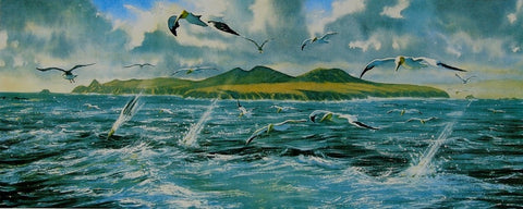 STDAVIDS.WALES:Gannets find the shoal, Ramsey Island by Andrew Bailey:Andrew Bailey:Paintings