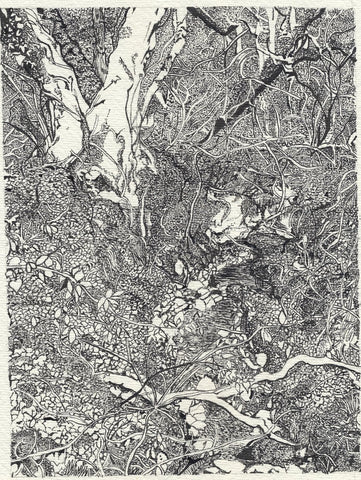 STDAVIDS.WALES:Indian ink and quill drawing print 'Beauty in the Detail':Charlotte Ashleigh Halton Davies:Prints