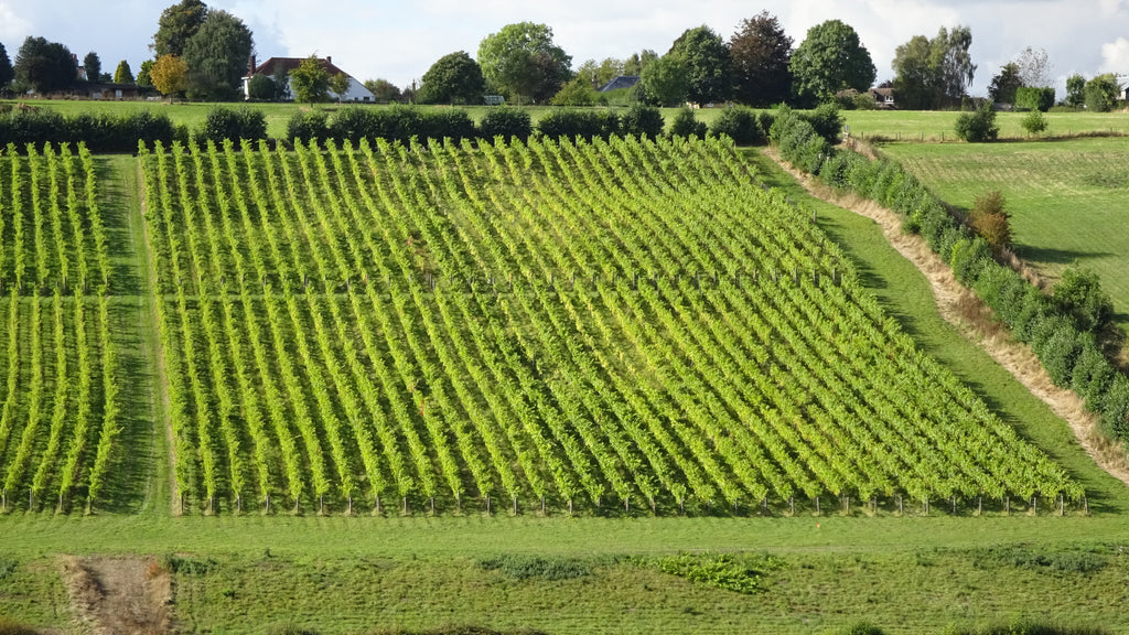 Meophams Vineyard interview by The English Wine Collection