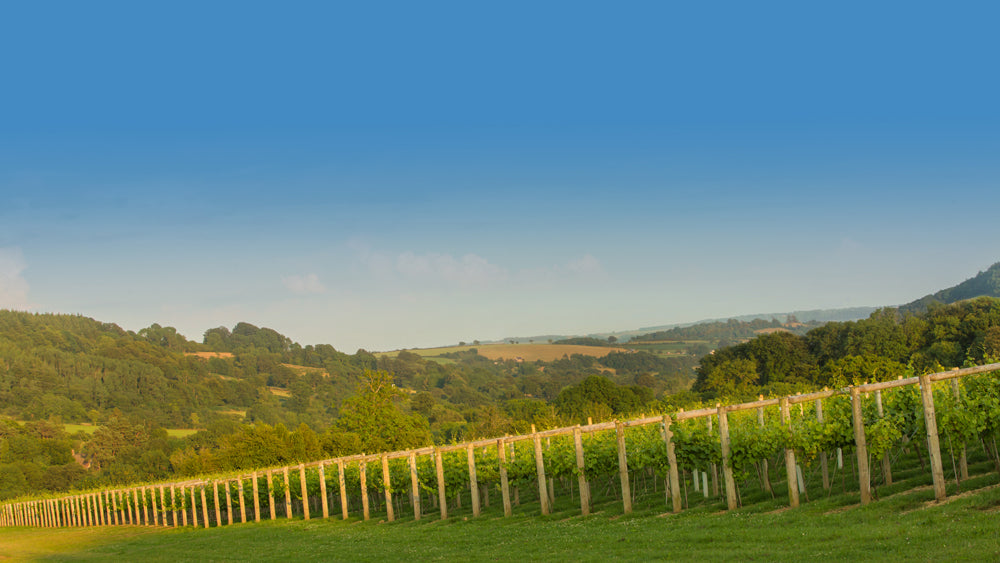 Lymebay Vineyard interview by The English Wine Collection