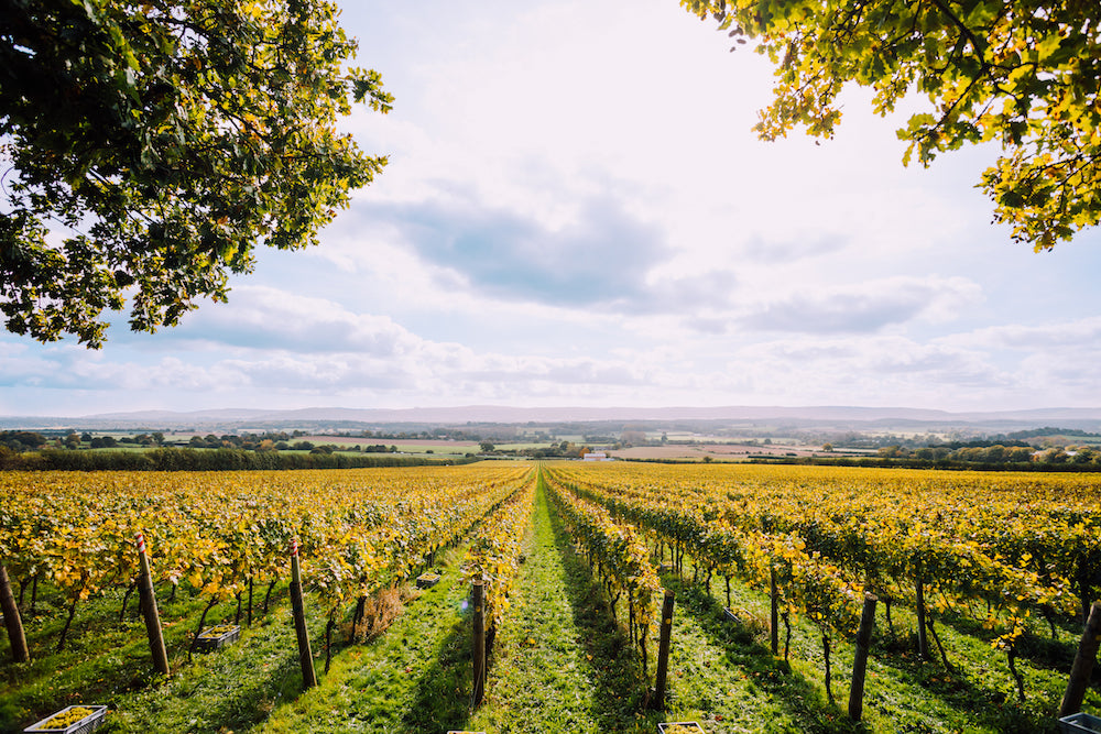 Wine maker Brad Greatrix talks about Nyetimber's 30-year history
