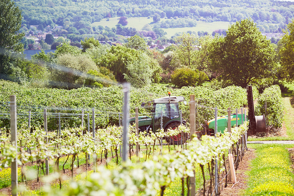 Sixteen Ridges Vineyard interview by The English Wine Collection