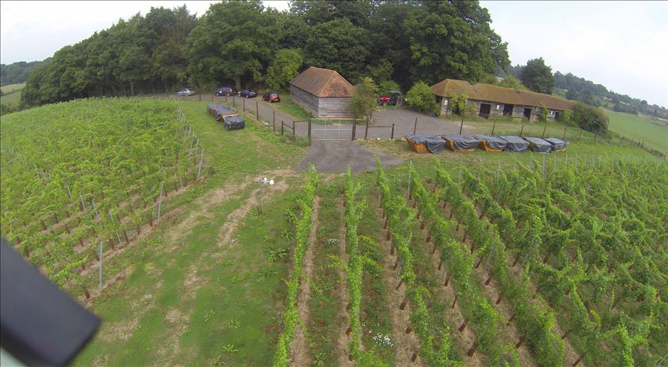 Windsor Great Park Vineyard interview by The English Wine Collection