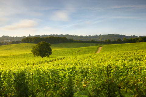 Denbies English wines the english wine collection