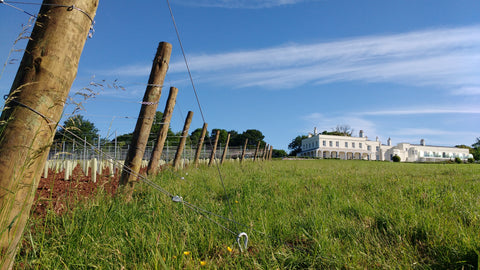Michael Caines new vineyard at Lympstone Manor english wine english vineyard