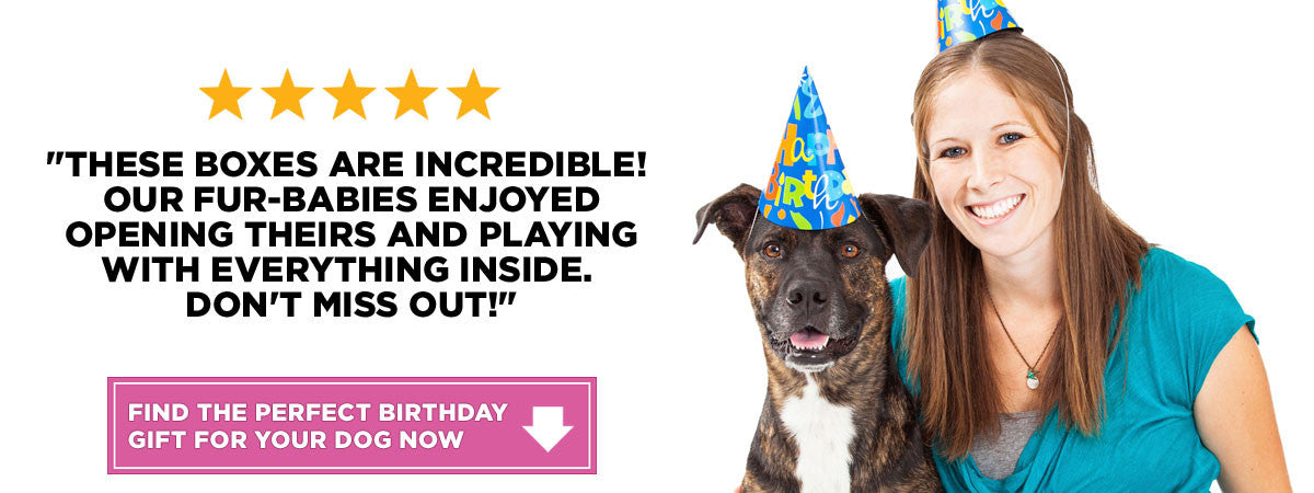 Find the best dog birthday gift boxes to celebrate your best friend's special day!