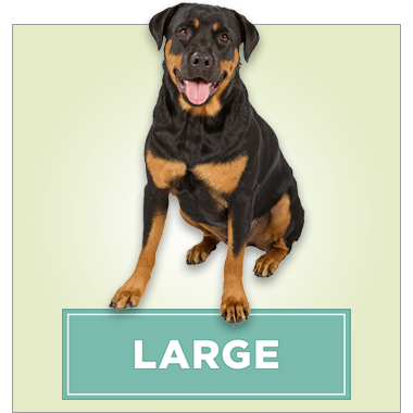 Large Dogs (60 lbs and over)