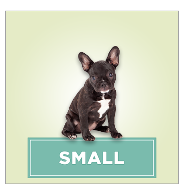 Small Dogs (under 30 lbs)