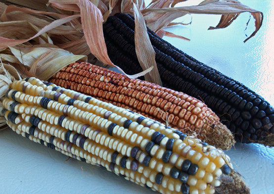 """Roscoe's Favorite"" Indian Corn"