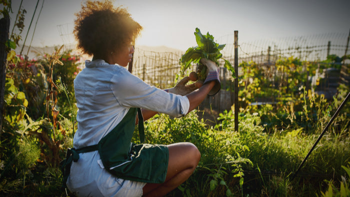 Call to Action: Petition For Centralizing Black Farmers!